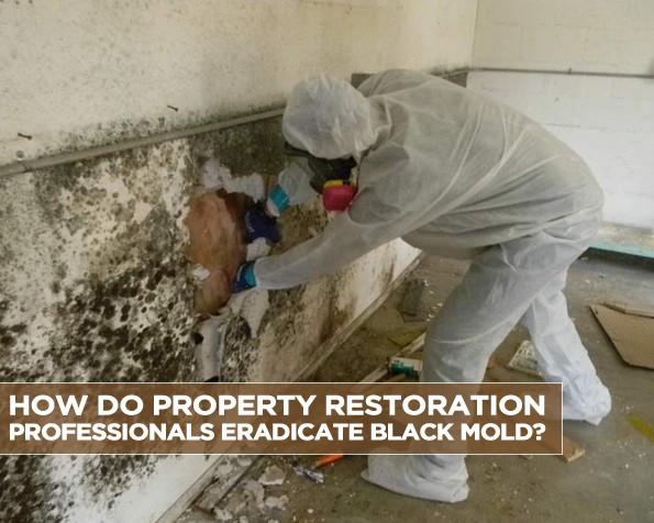 How Do Property Restoration Professionals Eradicate Black Mold