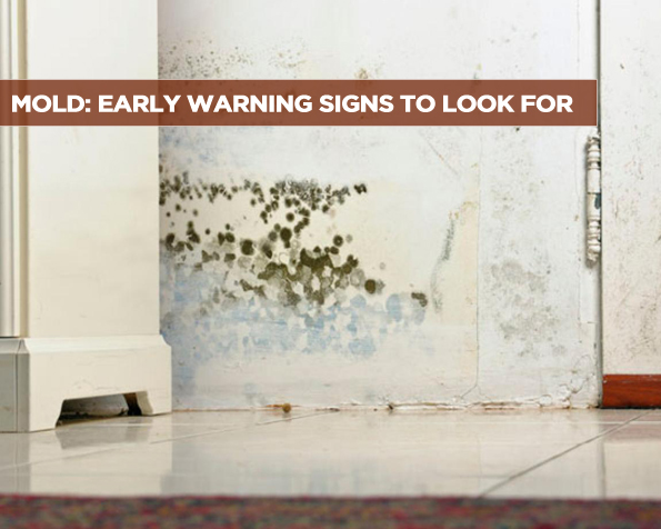Mold Early Warning Signs to Look For