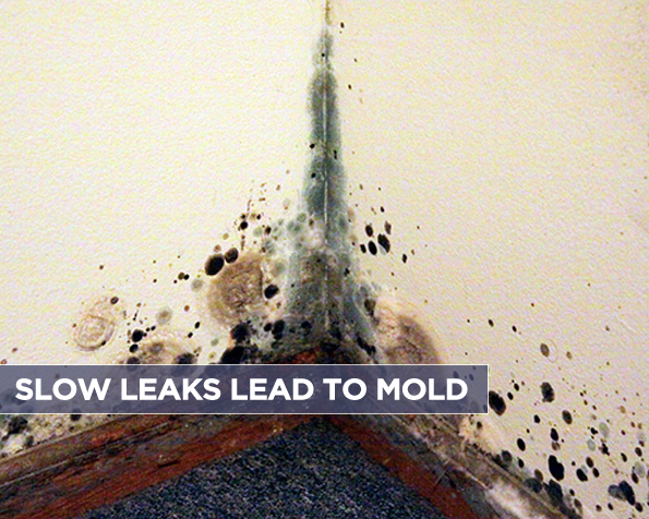 Slow Leaks Lead to Mold