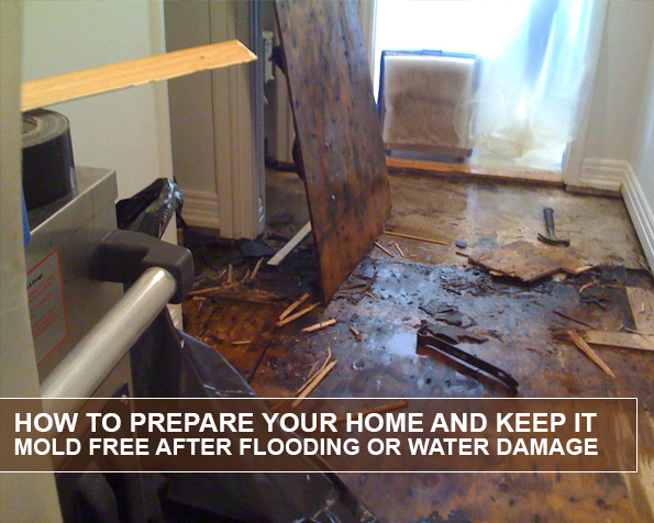 how-to-prepare-your-home-and-keep-it-mold-free-after-flooding-or-water-damagehow-to-prepare-your-home-and-keep-it-mold-free-after-flooding-or-water-damage