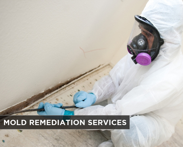 Mold Remediation Services in Palm Beach   561-247-3506