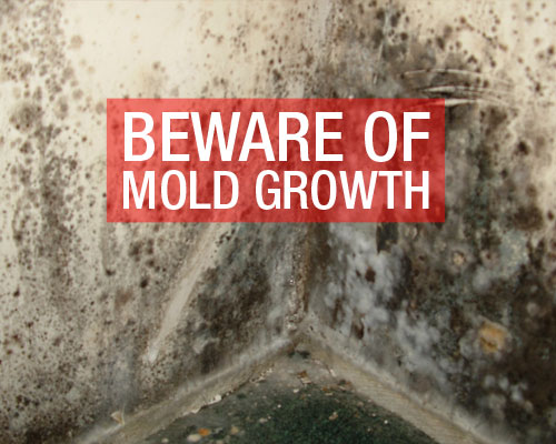 BEWARE-Of-MOLD-GROWTH
