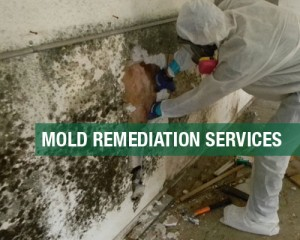 Mold-Remediation-Services