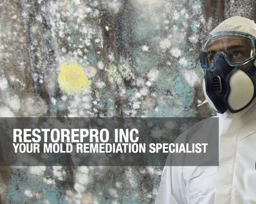 RestorePro-Inc-Your-Mold-Remediation-Specialist