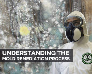 Understanding the Mold Remediation Process