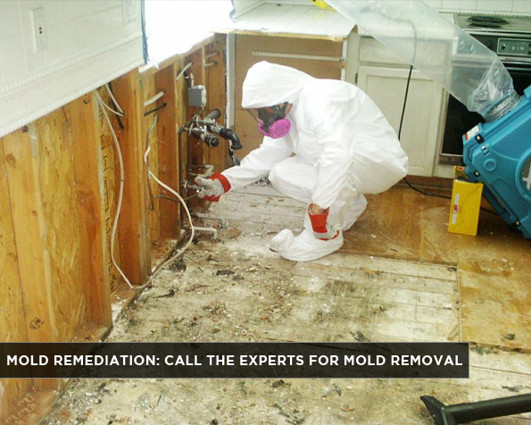 High Point Mold Testing