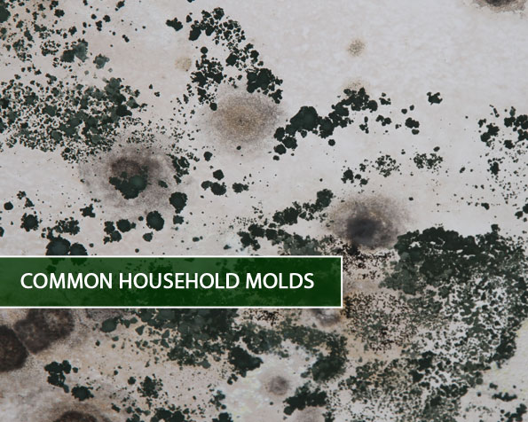 Common-Household-Molds