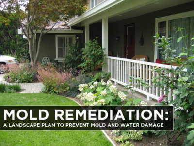 Mold-Remediation-A-Landscape-Plan-to-Prevent-Mold-and-Water-Damage-2-1
