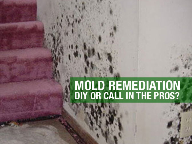 Mold-Remediation-DIY-or-Call-in-the-Pros