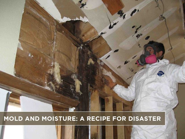 Mold-and-Moisture-A-Recipe-for-Disaster