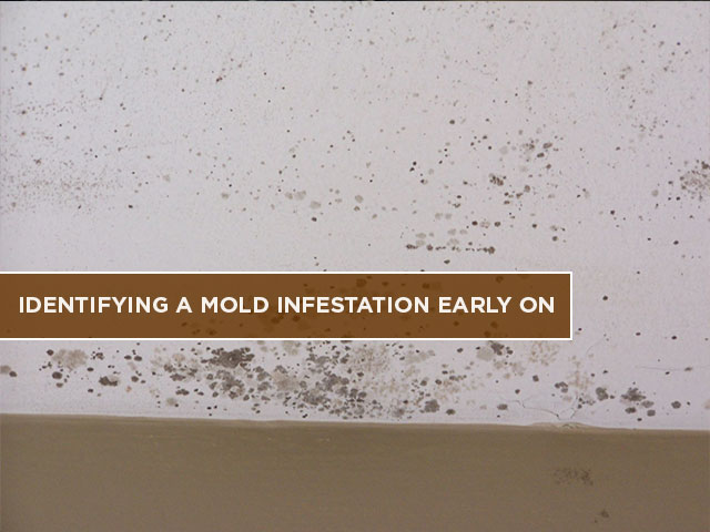 Identifying a Mold Infestation Early On