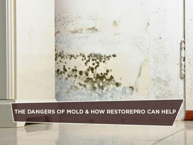 The Dangers of Mold & How RestorePro Can Help