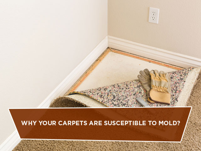 Why Your Carpets Are Susceptible To Mold