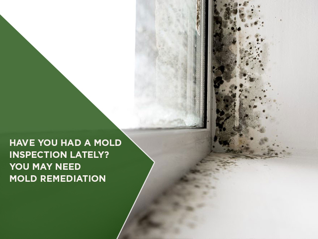 Have You Had A Mold Inspection Lately? You May Need Mold Remediation