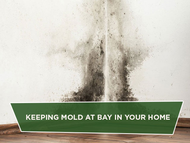 Keeping Mold at Bay in Your Home