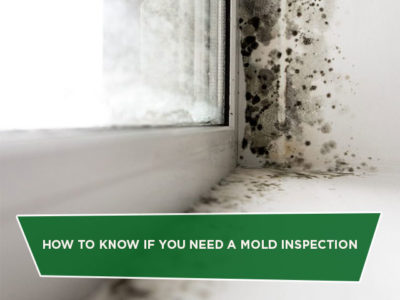 How to Know if You Need a Mold Inspection