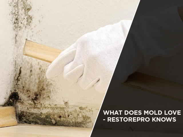 What Does Mold Love - RestorePro Knows