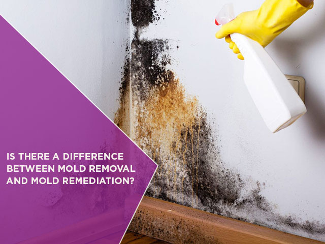 Is-There-A-Difference-Between-Mold-Removal-And-Mold-Remediation