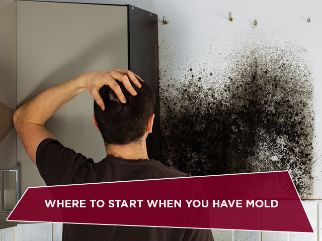 Where to Start When You Have Mold
