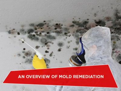 An Overview of Mold Remediation