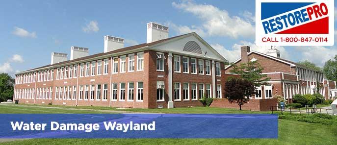Water Damage Wayland