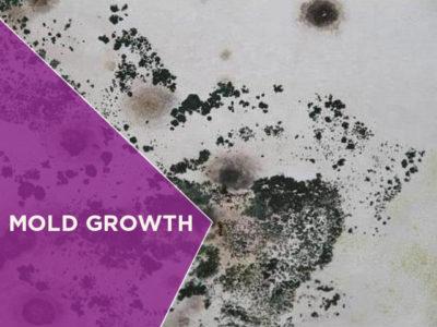 Mold Growth
