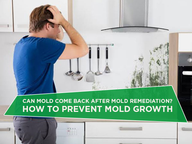 Can Mold Come Back After Mold Remediation? How To Prevent Mold Growth