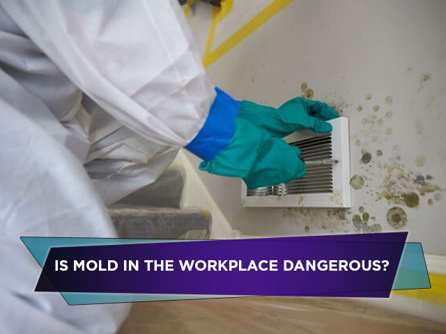 Is Mold In The Workplace Dangerous? How Mold Remediation Will Make It Safer For Employees